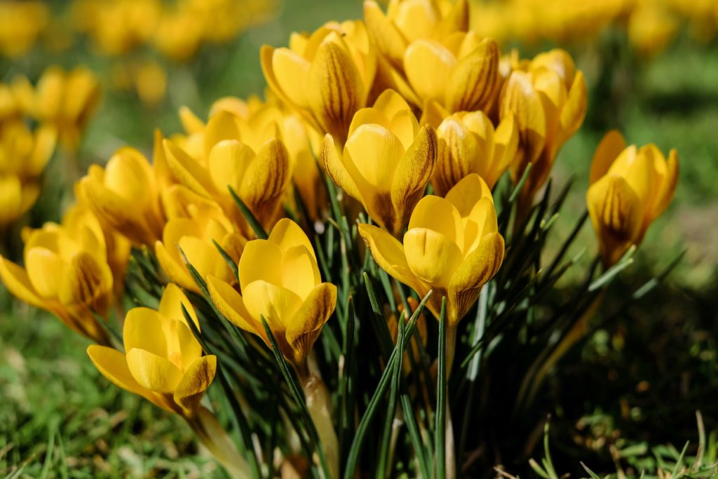 Are you buying a home in the spring?