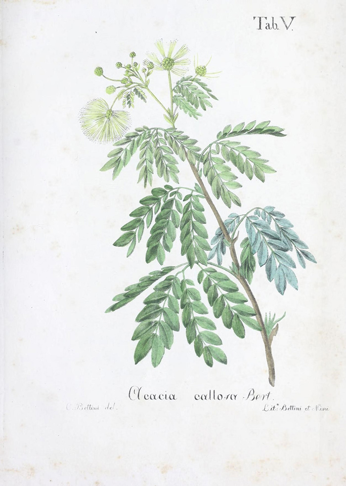 Authentic original botanical prints for free download