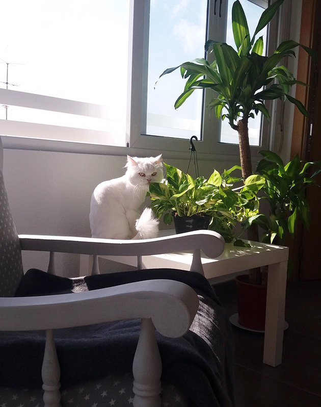 Non-toxic plants for pets