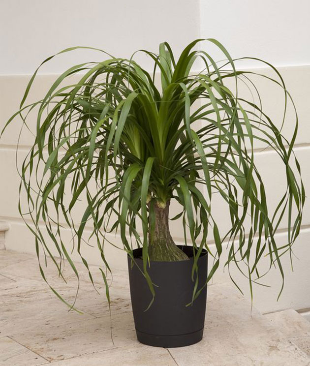 Palm rep.  A safe plant for dogs and cats