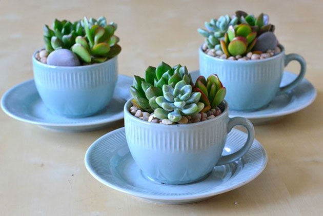 Succulents Safe plant for dogs and cats