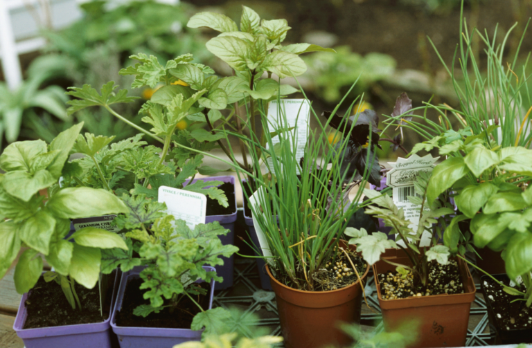 How to have a mini garden in the apartment (even if you have never planted anything)